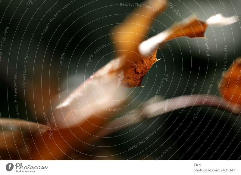 Blatt Natur Pflanze Frühling Sommer Herbst Bewegung Blühend verblüht ästhetisch authentisch einfach elegant frisch natürlich braun grün orange Gelassenheit