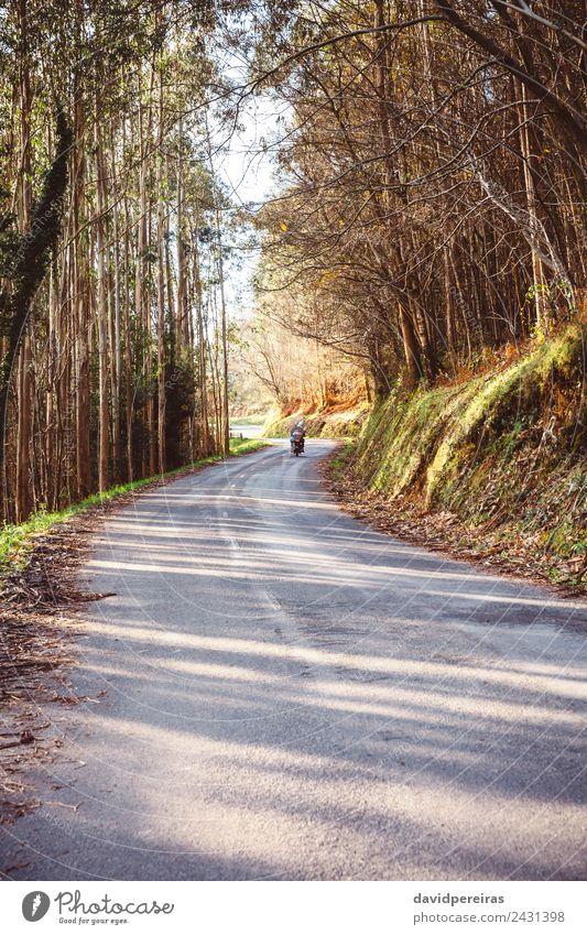 Waldstraßenlandschaft mit Paarfahrmotorrad Lifestyle Freizeit & Hobby Ferien & Urlaub & Reisen Tourismus Ausflug Abenteuer Freiheit Erwachsene Natur Landschaft