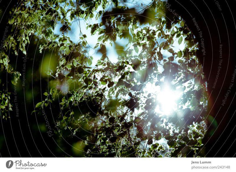 Shine On You Crazy Diamond Himmel Baum grün blau Blatt Umwelt Ast