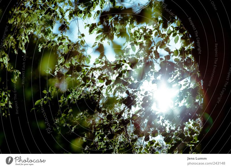 Shine On You Crazy Diamond Umwelt Baum Blatt blau grün Himmel Ast Farbfoto Menschenleer Tag Unschärfe