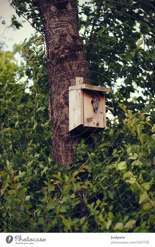 Daheim Umwelt Natur Frühling Sommer Pflanze Baum Sträucher Blatt Tier Wildtier Vogel Meisen natürlich grün Sicherheit Schutz Geborgenheit mutterinstinkt