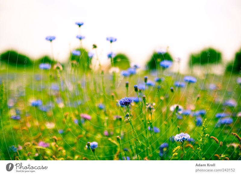 Wildblumenwiese Natur Blume Pflanze Sommer ruhig Farbe Erholung Wiese Blüte Gras Freiheit Glück frei Horizont frisch Hoffnung