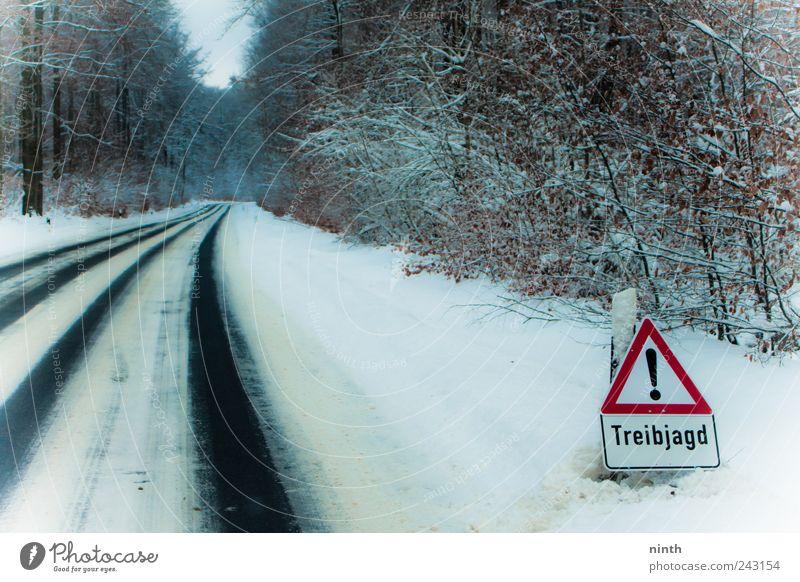 treibjagd ohne wild schön weiß Pflanze rot Winter ruhig Straße Wald kalt Schnee träumen Landschaft Eis Nebel Verkehr frisch
