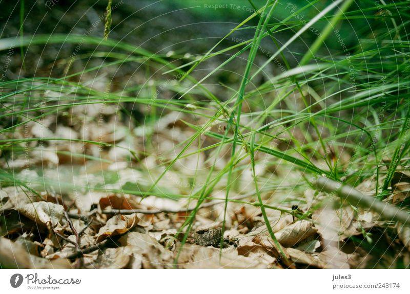 Wald – verborgen Natur Pflanze Gras wandern unten