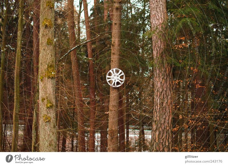 Denkste an Karsten Natur Baum Wald Autofahren Zeichen rund braun ruhig bizarr entdecken Autofelge Baumstamm Farbfoto Außenaufnahme Tag