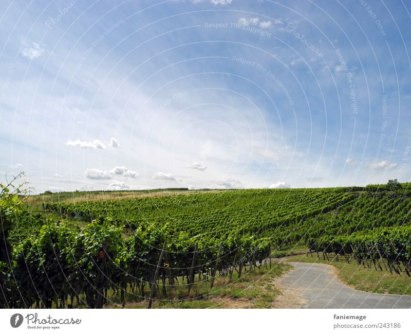 promenade Umwelt Natur Landschaft Himmel Wolken Sommer Schönes Wetter Feld Erholung wandern blau grau grün ruhig Horizont Rheingau Panoramaweg Rüdesheim