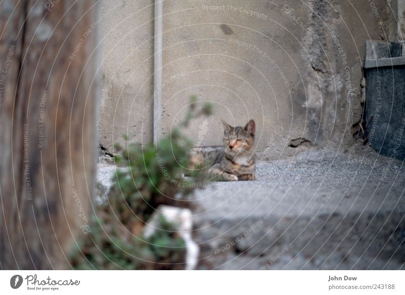 Katzenleben Tier Katze Gras Zufriedenheit Fassade laufen liegen Sträucher Asphalt abblättern Stadtrand Trägheit faulenzen