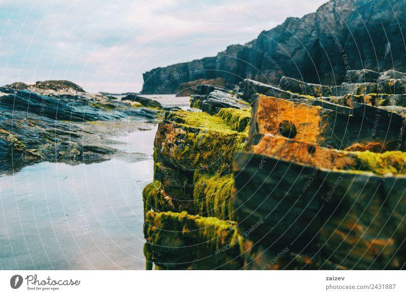 Pfütze mit Spiegelung von Steinen mit Algen am Strand exotisch Ferien & Urlaub & Reisen Tourismus Meer Insel Wellen Umwelt Natur Landschaft Sand Wasser Klima