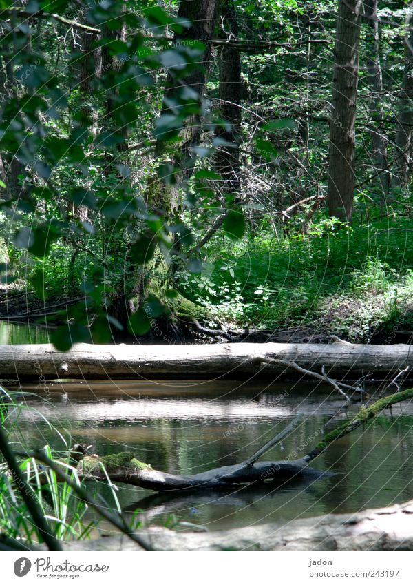 waldesruh. Natur Wasser Baum Pflanze ruhig Landschaft wandern Umwelt Ausflug Tourismus Landwirtschaft Urwald Seeufer Schönes Wetter Bach Teich