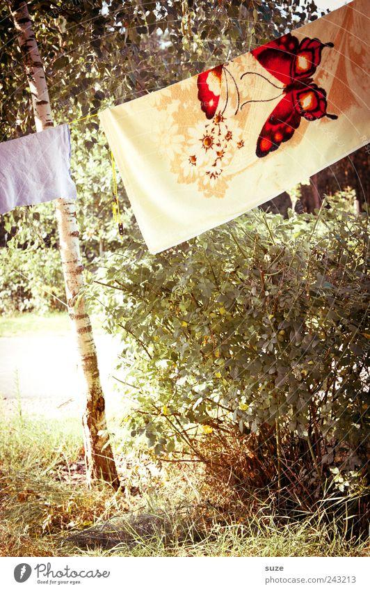 Trockenbau Natur Baum grün Pflanze Ferien & Urlaub & Reisen Wiese Design Umwelt Sträucher Klima Freizeit & Hobby Schmetterling Camping Baumstamm hängen