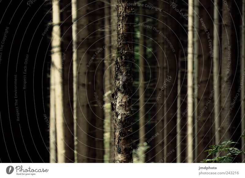 Wald Natur alt Baum Pflanze Ferien & Urlaub & Reisen ruhig Park Landschaft Angst warten wandern Umwelt Ausflug Wachstum stehen