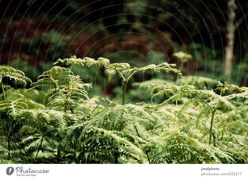 Farn Natur grün Pflanze ruhig Wald Wiese Garten Park Landschaft Zufriedenheit Kraft wandern Umwelt frei Ausflug frisch