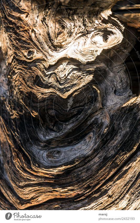 kleines Monster Holz Maserung Alterserscheinung alt außergewöhnlich natürlich braun Natur Wandel & Veränderung eigenwillig Farbfoto Gedeckte Farben
