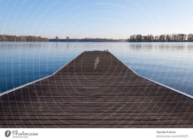 Ruhe ruhig Umwelt Natur Landschaft Wasser Himmel Wolkenloser Himmel Sommer Schönes Wetter See Berlin Tegel Menschenleer Denken Erholung liegen Schwimmen & Baden