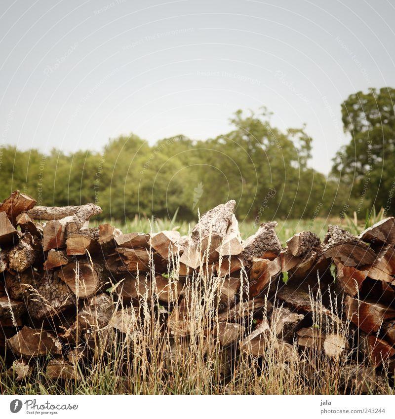 holz Natur Landschaft Himmel Pflanze Baum Gras Sträucher Holz natürlich blau braun grün Brennholz Farbfoto Außenaufnahme Menschenleer Textfreiraum oben Tag
