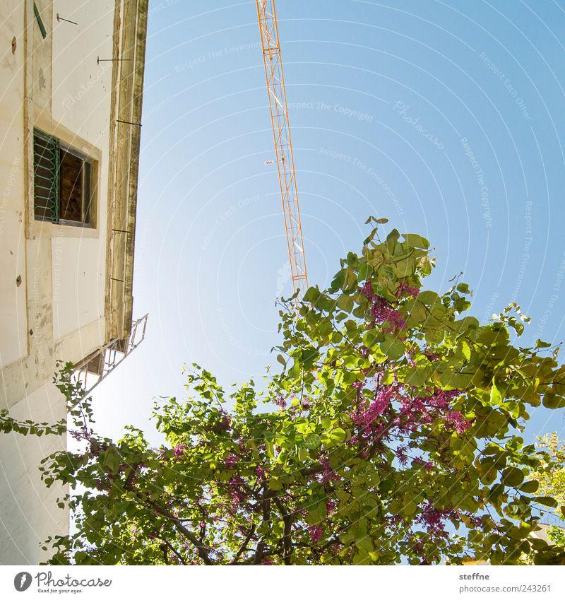 Blühling Wolkenloser Himmel Frühling Schönes Wetter Baum Lissabon Portugal Altstadt Haus Mauer Wand Fassade historisch Blühend Kran mediterran südländisch