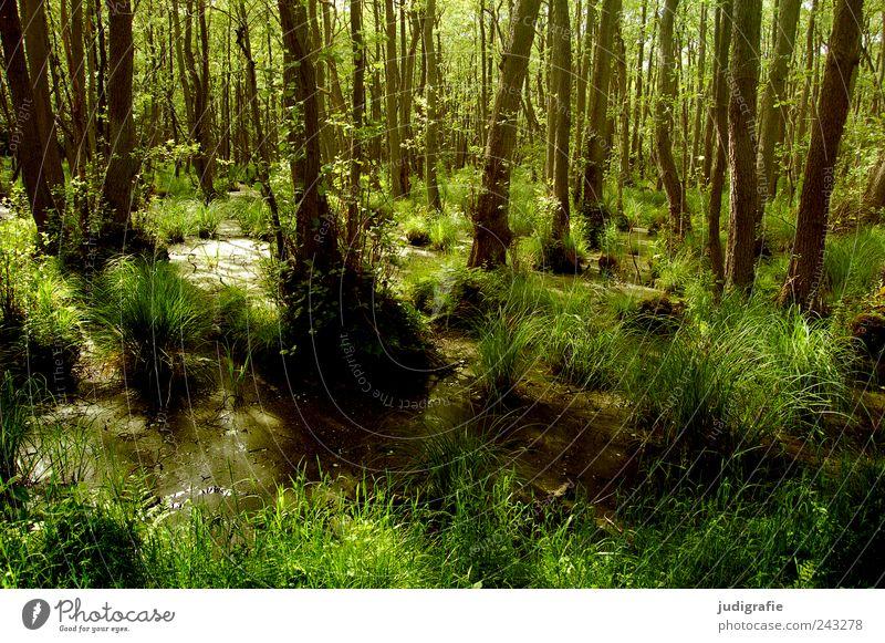 Darßwald Natur Baum grün Pflanze Gras Landschaft Stimmung Umwelt nass Wachstum wild natürlich Urwald Moor