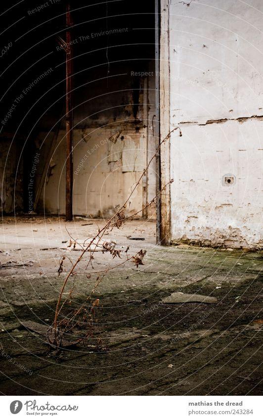 AUSGETROCKNET Umwelt Natur Pflanze Gras Sträucher Menschenleer Industrieanlage Fabrik Ruine Bauwerk Gebäude Architektur Mauer Wand Fassade dunkel kalt kaputt