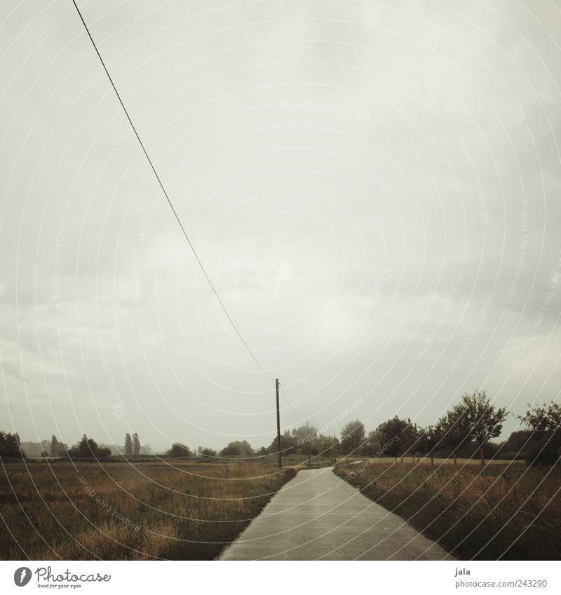 sommer Natur Landschaft Pflanze Himmel schlechtes Wetter Baum Gras Sträucher Feld Wege & Pfade trist Farbfoto Außenaufnahme Menschenleer Textfreiraum oben Tag