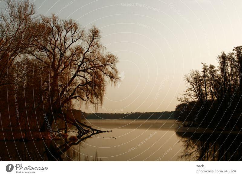 Brandenburg Natur Wasser Baum ruhig Einsamkeit Tier dunkel Erholung Herbst Gras See Vogel Küste Wellen Idylle Seeufer