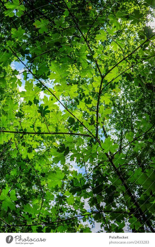 #S# Blätterdach Himmel Natur blau schön grün Baum Umwelt Wachstum einzigartig Energie Fotografie Baumkrone nachhaltig Lichtspiel Lichtschein Grünpflanze