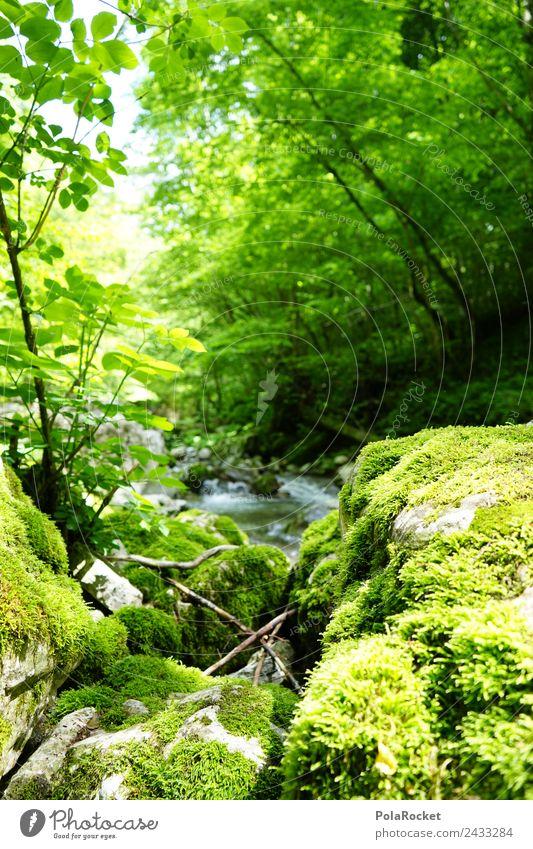 #S# Bach Idylle Umwelt Natur nass natürlich Naturschutzgebiet Naturphänomene Slowenien grün Moos Stein Wasser frisch Erholung Fluss Sonnenlicht Wachstum