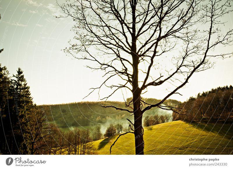 Natur Pur Umwelt Landschaft Schönes Wetter Wiese Wald Hügel Menschenleer Unendlichkeit schön Idylle ruhig Ferne Farbfoto Außenaufnahme Morgendämmerung Tag Abend