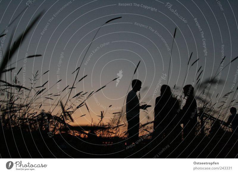 Grasgeflüster Mensch Natur Jugendliche Himmel blau Pflanze Sommer schwarz Leben sprechen Wiese Menschengruppe Luft Freundschaft Stimmung