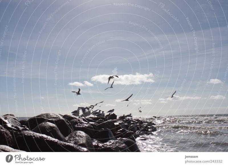 Nachzügler Umwelt Natur Tier Himmel Wolken Sommer Küste Strand Nordsee Meer Tiergruppe Schwarm fliegen nass natürlich Wärme blau schwarz Stimmung Freiheit Ferne