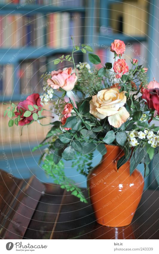Bibliothek... alt Pflanze Blume Blüte Stil Feste & Feiern Schule Wohnung Häusliches Leben Ordnung Dekoration & Verzierung Geburtstag Buch Tisch lernen retro