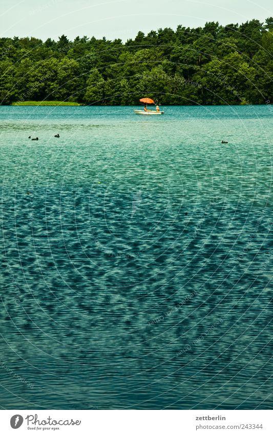 Strausberger See Mensch Natur Sommer Freude Ferien & Urlaub & Reisen ruhig Berlin Erholung Gefühle Stil Landschaft Zufriedenheit Wasserfahrzeug Wellen Wetter
