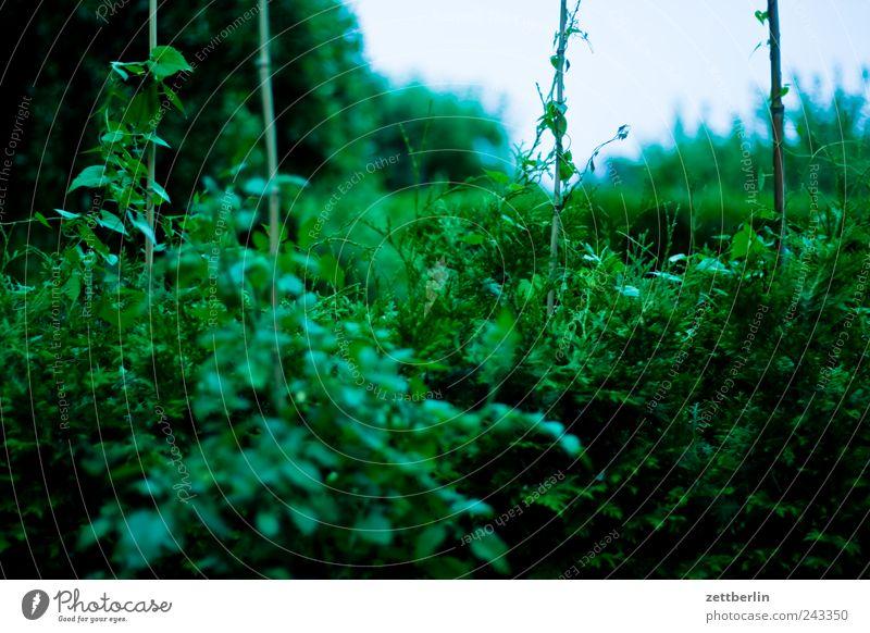 Ähnliche Stelle, andere Zeit Erholung Garten Natur Pflanze Baum Wachstum dunkel Romantik Flamme Schrebergarten wallroth Hecke grün Urwald Wildnis Blatt Farbfoto