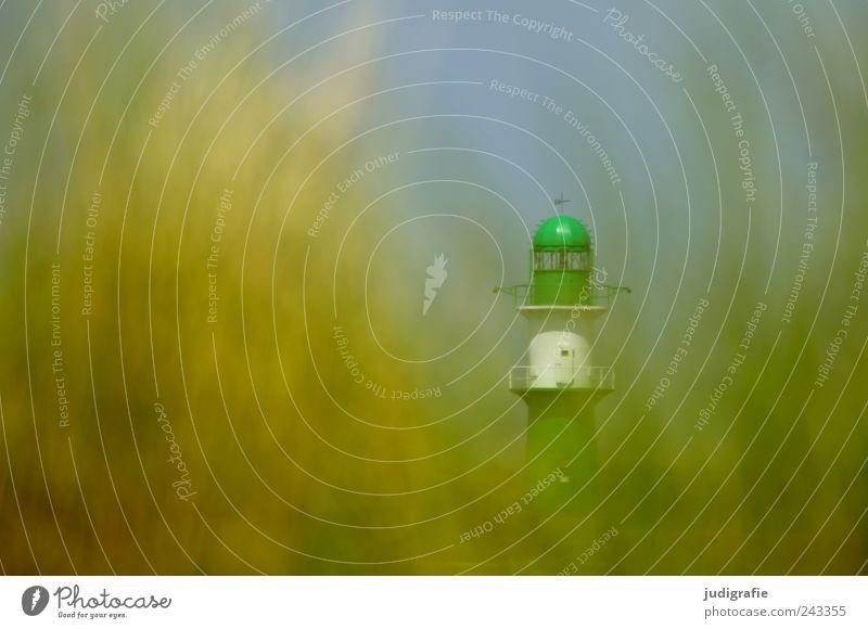 Warnemünde Natur grün Pflanze Sommer Strand Gras Landschaft Stimmung Küste Umwelt verstecken Leuchtturm Ostsee Leuchtfeuer