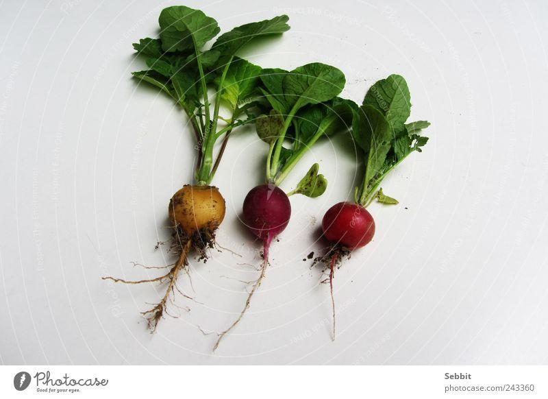 Radieschen Natur grün Sommer rot Pflanze Blatt gelb Garten Gesundheit Erde Feld Lebensmittel dreckig frisch rund violett