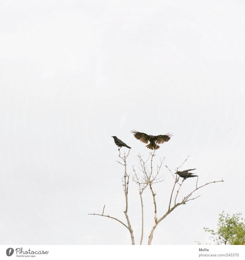 Landeplatz Natur Baum Pflanze Tier Bewegung Freiheit hell Zusammensein Vogel Umwelt fliegen frei sitzen Flügel Ast natürlich