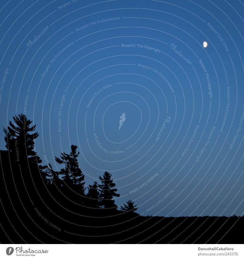 Nachtruhe Natur Himmel Baum blau Pflanze ruhig schwarz Wald Stil Berge u. Gebirge Stimmung Romantik Nachthimmel Idylle Hügel Tanne