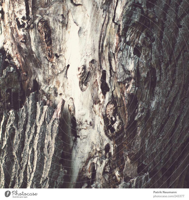 Sein Innerstes zeigen Natur alt weiß Baum Tod Holz braun dreckig Umwelt trist kaputt Spitze natürlich Schmerz Verfall trocken