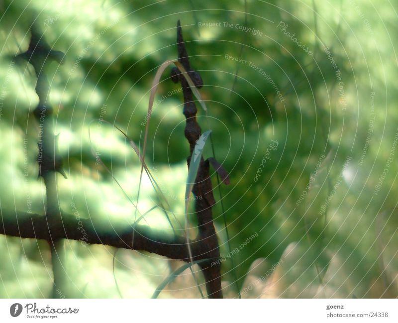 Ewigkeit Natur alt Gras Zaun Eisen verträumt Friedhof Zaunpfahl
