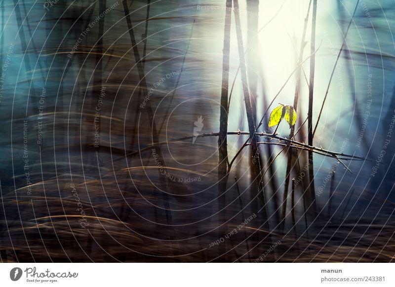 Waldlicht Natur Baum blau Blatt Einsamkeit dunkel kalt Herbst braun Sträucher Ast bizarr Surrealismus herbstlich