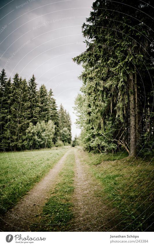 follow the waldweg Umwelt Natur Landschaft Himmel Klima Wetter schlechtes Wetter Baum Wald grün Wege & Pfade Ziel laufen Einsamkeit Gras Außenaufnahme Mitte