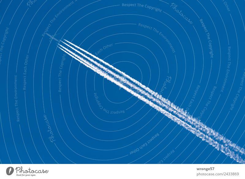 Fernflieger Himmel Ferien & Urlaub & Reisen blau weiß Ferne kalt fliegen Luftverkehr Geschwindigkeit hoch Flugzeug Flugangst Wolkenloser Himmel Blauer Himmel