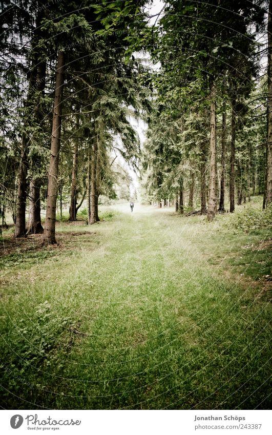 follow the waldweg II Mensch Natur grün Wald Umwelt Wiese Landschaft Gefühle Gras Wege & Pfade Stimmung braun Angst laufen wandern ästhetisch