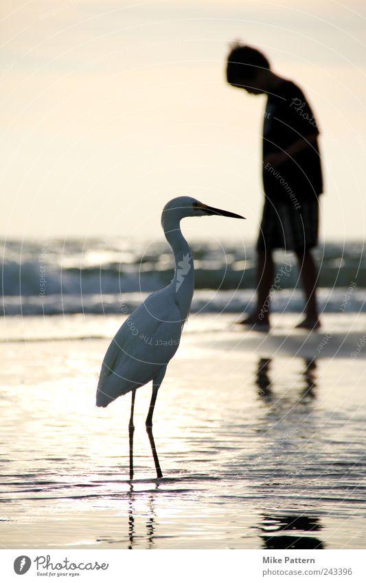 Begegnung Mensch Natur Wasser schön Sommer Ferien & Urlaub & Reisen Meer Strand ruhig Tier Junge Freundschaft Vogel Horizont gehen maskulin
