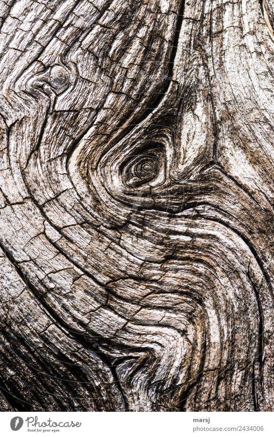 Elefantenauge? Astloch Maserung Riss Holz alt außergewöhnlich dunkel elegant gruselig kaputt natürlich trist braun Traurigkeit Trauer Schmerz Enttäuschung