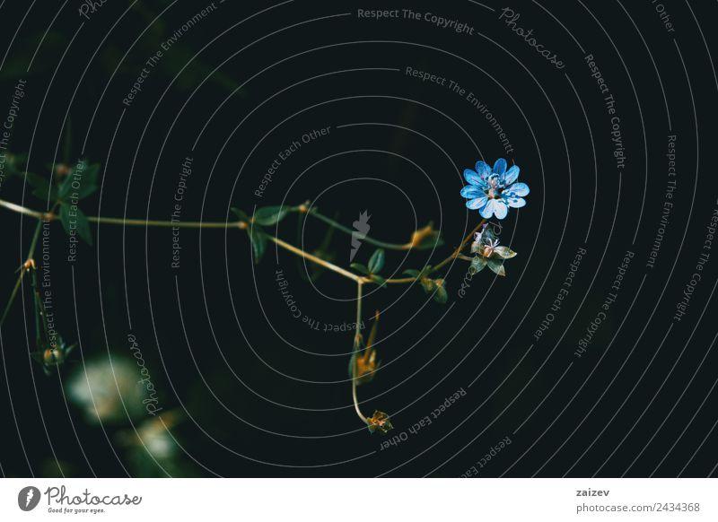 Natur Sommer blau Pflanze Farbe schön grün Blume Blatt Wald schwarz Blüte Wiese natürlich klein Garten