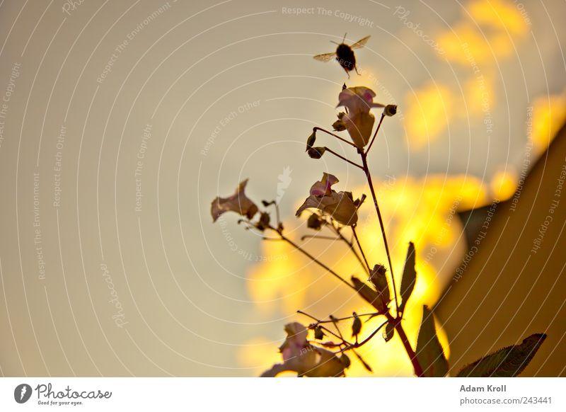 Take off Natur Tier Freiheit fliegen natürlich Warmherzigkeit Blühend Biene leuchten Frühlingsgefühle