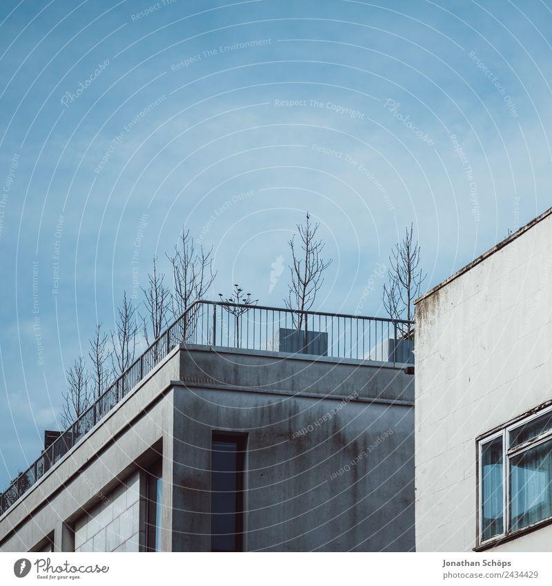 kahle kleine Bäume auf einer Dachterasse blau Pflanze Stadt Baum Haus Winter Architektur kalt Gebäude Fassade oben Häusliches Leben Hochhaus Wachstum