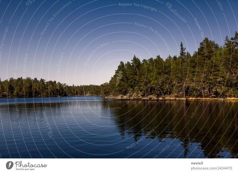 Bewaldetes Seeufer im Süden von Schweden Umwelt Natur Landschaft Wasser Wolkenloser Himmel Frühling Sommer Baum Wald Küste Bucht Insel Schwimmen & Baden schön