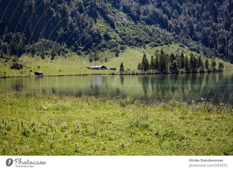 Almträume Natur grün schön Baum Pflanze Ferien & Urlaub & Reisen Sommer Haus Wald Wiese Berge u. Gebirge Landschaft Gras See Feld Ausflug