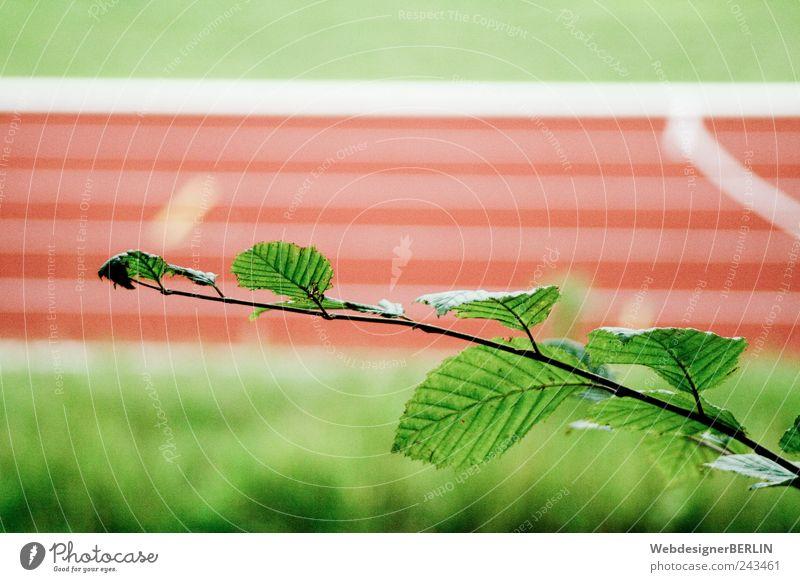 der blättrige Ast vor Sportbahn rot Blatt Laufsport Sport-Training Rennbahn Sportveranstaltung Wettlauf Laufbahn Sportstätten